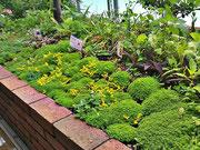夏のふしみ縁庭
