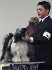 Tibet Terrier_Peter Künzel_Oelde