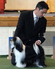 Tibet Terrier of Dog´s Wisdom_Peter Kuenzel_Oelde