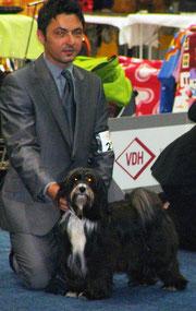 Tibet Terrier Peter Künzel Oelde Europasiegerzuchtschau 2011 Dortmund