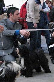 Tibet Terrier_Peter Künzel_Caesar´s Ce-Luuh-Naah made of Dog´s Wisdom_CACIB Rheinberg