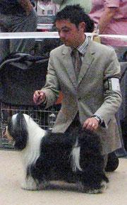 CACIB Ludwigshafen 2011 Tripitaka Oriental Lilly Tibet Terrier