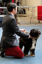 Whisky_Tibet Terrier Rüde_Oelde