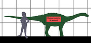 Größenvergleich zwischen Magyarosaurus und Mensch