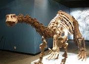 Skelett eines Lufengosaurus