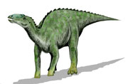 Bild eines Kritosaurus