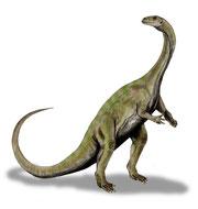 Bild eines Massospondylus