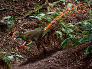 Bild eines Epidexipteryx