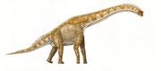 Bild eines Giraffatitan