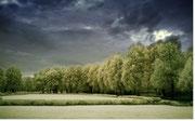 INITIATION A L'ANALYSE TRANSGENERATIONNELLE ET ELABORATION DE L'ARBRE (Psychogénéalogie : outil utilisé pour la construction de l'arbre)