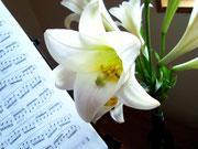 テッポウユリと楽譜
