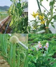 ミモレ農園のお野菜たち