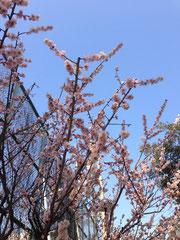 ▲春は近い、かな。