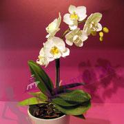 Orchideenzweig aus Blütenpaste - Kurs