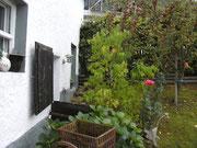 """Apfelbaum im """"Kleinen Garten"""" hinterm Kuhstall"""