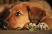 Marder und Hunde, Mardermittel, Marderabwehr, Duft gegen Marder
