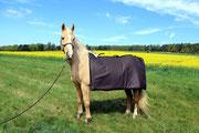 MAGmobil Horse