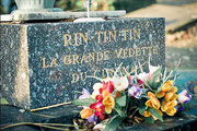 Rin tin tin... en París.
