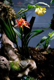 Orchideenvitrine