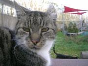 Jumbi ist nicht Schrödingers Katze