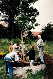 Bürgerverein pflanzt einen Baum am Brünnla