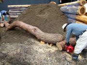 搬出した木材で花壇を縁取る