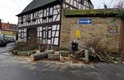 Baumreste vor St.-Gallus-Str. 6 und 7