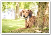 Tierfotografie Sabine Botje - DESIGN AM DEICH