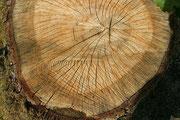 Dieses Schicksal muss dem Wald am Krogredder erspart bleiben!
