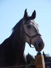 Cassi 2012