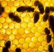 clicca per scoprire tutta la bontà del miele Gallo!