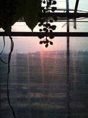 ハウスから夕陽を望んで