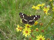 Blüten- und damit insektenreiche Säume verschwinden zunehmend auch im Wendland (O.Schuhmacher)