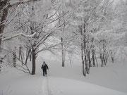 綺麗な樹氷の中、ふかふかの新雪を行く、頂上は真近。