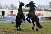 Foto: Zirkus Charles Knie