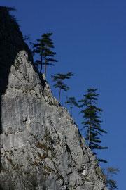 """steiler """"Wald"""" an der Klobenwand"""