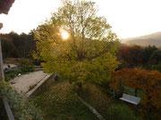 Le micocoulier en automne