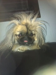 Even Chu Chu has a bad hair day on occasion!