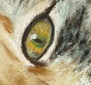 Katzenauge-Pastell