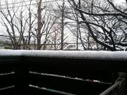 昨日の牡丹雪はこんな感じ