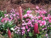 お花畑~♪