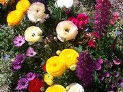 ~春の花~♪♪~