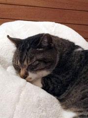 にゃおちゃんはいつも寝ていられて気楽だにゃ〜〜・・・