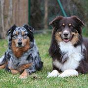 Ginger & Maverick