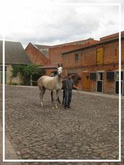 Pferdehof Leue, auf dem Hof