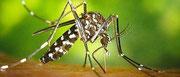 Traitement, lutte contre les moustiques, moustique tigre, Vaucluse, Orange, Avignon, Bollène, Vaison Romaine, 84