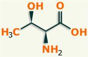 Treonina aminoácido