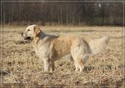 Lilly mit 3 1/2 Jahren im Nov. 2011