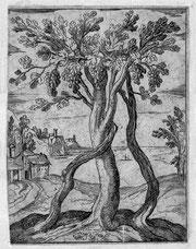 L'ormeau et la vigne, Gravure d'Antonio Tempesta/Vignes en hautain/Musée de la vigne et du vin/Château d'Aigle, Suisse