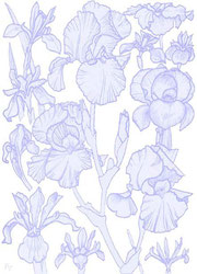 Click to get to the website of the German Iris Group